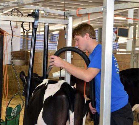 A-FFA Cow Show pic2