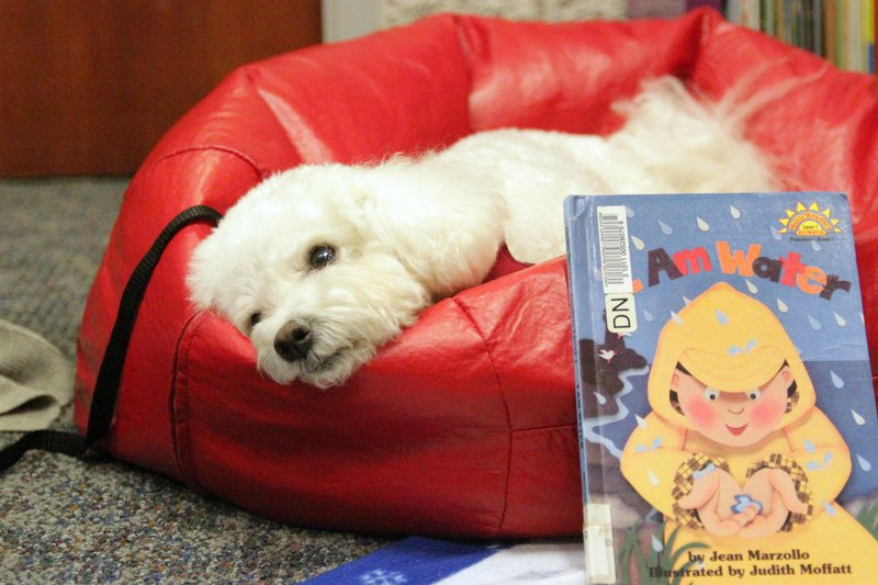 READ to dogs 13