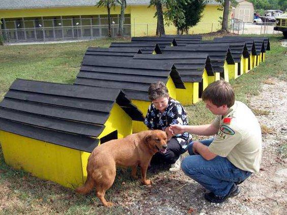 5 Dog Houses pic2