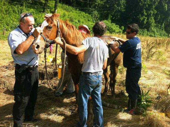 Horse Rescue pic