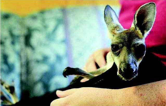 I-Kangaroo pic1