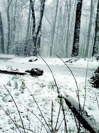I-Surprise snow Amicalola pic1