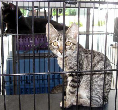 3 Humane Society pic2