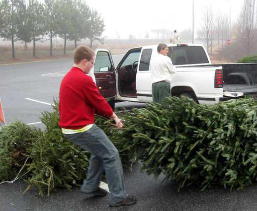 Tree Recycling pic