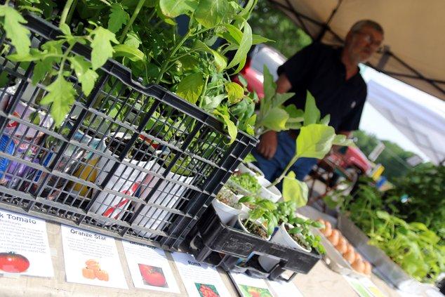 farmers market pic 3