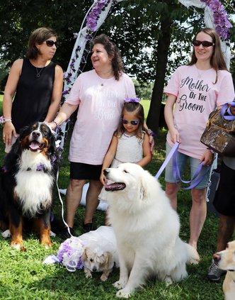 dog wedding 1