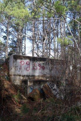 dawson forest 4