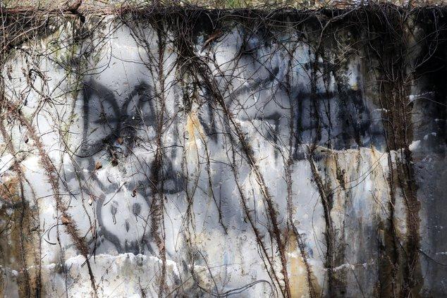 dawson forest 5