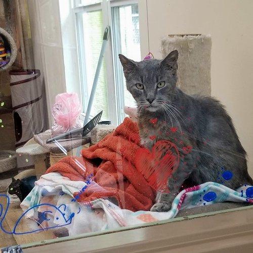cat quilts 4