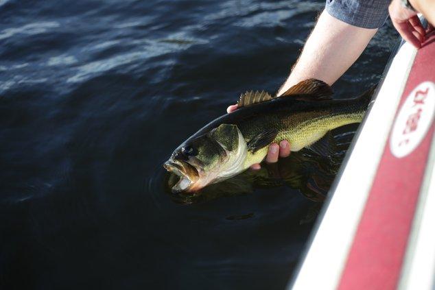 fishing stock 5