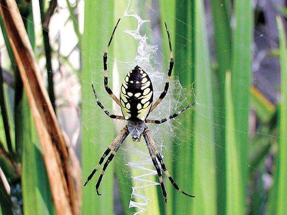 10082020_Spiders2.max-1200x675.jpg