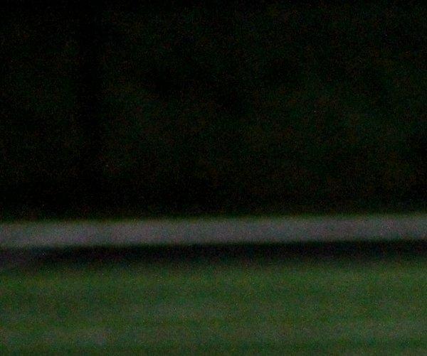 TigersFootball1.jpg