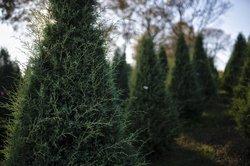 11272020_TREES_12.max-1200x675.jpg